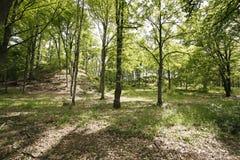 Park im Frühjahr Stockbild