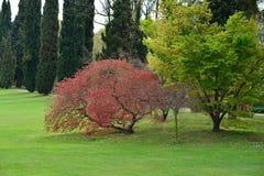 Park im Frühjahr lizenzfreies stockbild