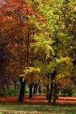 Park im Herbst Stockbilder