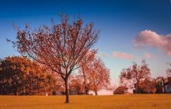 Park im Herbst alte Ruinen und die Festung Lizenzfreie Stockfotos