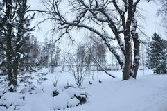 Park im Schnee Stockfoto