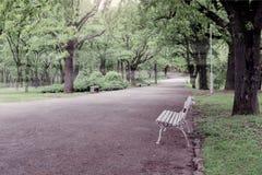 Park im Wald Stockbild