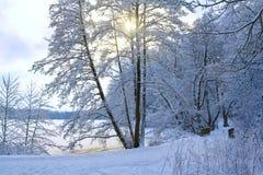Park im Winter Stockfotos