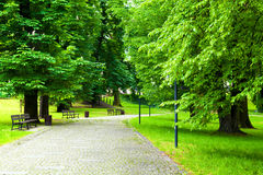 Free Park In Spring Royalty Free Stock Image - 34505466