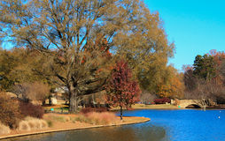 Free Park In The Fall 3 Royalty Free Stock Photo - 47184705