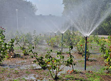 Park irrigation Royalty Free Stock Images