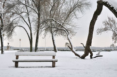Park in the January. Winter in the park at January stock photos