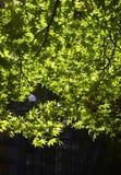 Park in Japan Stock Afbeeldingen
