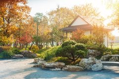 Park in japanese style with red yellow maple trees. Autumn scenery of park in japanese style with red yellow maple trees and green pine, stone garden with zen stock image