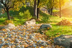 Park in japanese style with red yellow maple trees. Autumn scenery of park in japanese style with red yellow maple trees and green pine, stone garden with zen royalty free stock photography