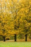 park jesienni drzewa Fotografia Royalty Free