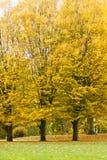 park jesienni drzewa Zdjęcie Stock