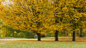 park jesienni drzewa Obraz Stock