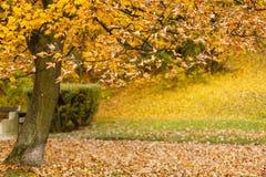 park jesienni drzewa Zdjęcia Stock