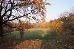Park of Kamenica Novi Sad,Srbija. Trees, leaves, grass. In the background blue sky and above the top of the bridge stock photo