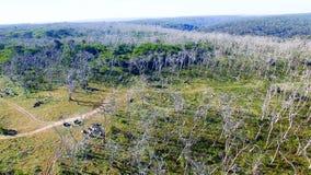 Park Kap Otway Nationa, Australien Schattenbild des kauernden Geschäftsmannes Lizenzfreies Stockfoto