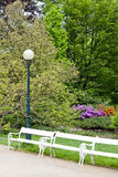 Park in Karlovy Vary Royalty Free Stock Photo