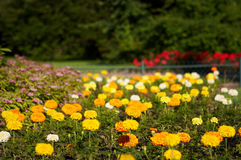Park in Karlovy Vary. Flowers in the morning park of Karlovy vary Royalty Free Stock Photography