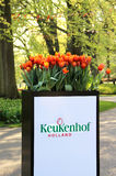 Park Keukenhof, Holland Stock Photo