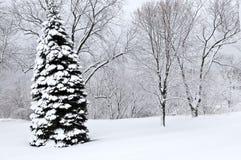 park krajobrazowa zimy. Obraz Royalty Free