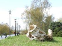 Park, kreatywnie, natura, drzewa, molo Zdjęcia Stock