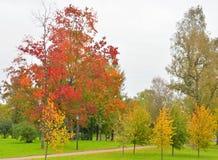 Park Kurakina Dacha early autumn. Stock Photos