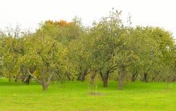 Park Kurakina Dacha early autumn. Royalty Free Stock Image