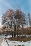 Park Kuzminki. Spring in the Park Kuzminki stock image