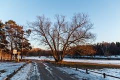 Park Kuzminki. Spring in the Park Kuzminki stock photo