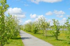 Park, kwiatonośni drzewa i rzeka, Zdjęcia Stock