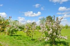 Park, kwiatonośni drzewa 2 i rzeka, Obrazy Royalty Free