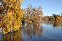 Park and lake in autumn. Beautiful views of the park and lake in autumn Stock Photo
