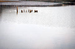 Park lake Stock Image