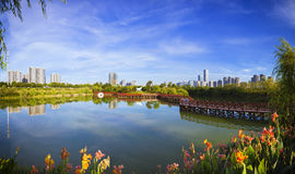 Park with lake and city modern office building.  Royalty Free Stock Image