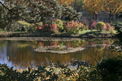 Park lake in fall colors. Scene Stock Photos
