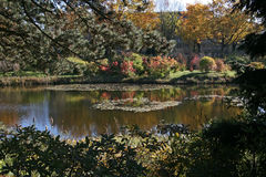 Park lake in fall colors. Scene Stock Photography