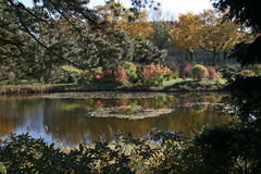 Park lake in fall colors. Scene Stock Images