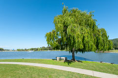 Park with lake, fountains tree and grass Royalty Free Stock Images