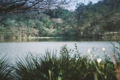 Park lake with some plants and flowres in front. Plants and flowers in front of a lake in the park royalty free stock photography