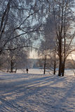Park and a lake on winter day Royalty Free Stock Image
