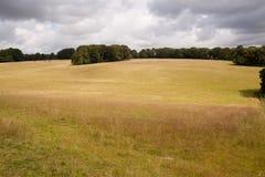 Park-Land, Cranborne Verfolgung, Dorset, Großbritannien Lizenzfreie Stockbilder