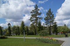 Park landscape stock image