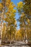 Park Landscape Stock Photography