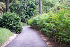 Park landscape Royalty Free Stock Image