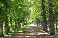 Park landscape alley Stock Photo