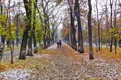 Park landscape in autumn Stock Images
