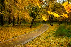 Park landscape at autumn. Park landscape at golden fall Stock Images