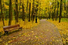 Park landscape at autumn. Park landscape at golden fall Stock Photography