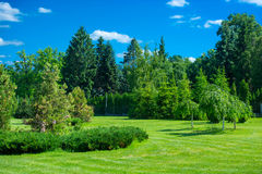 Park landscape. With green grass, trees and blue sky Stock Images
