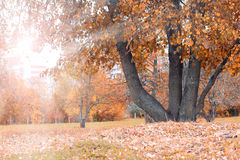 Park landscape lonely tree Royalty Free Stock Photos